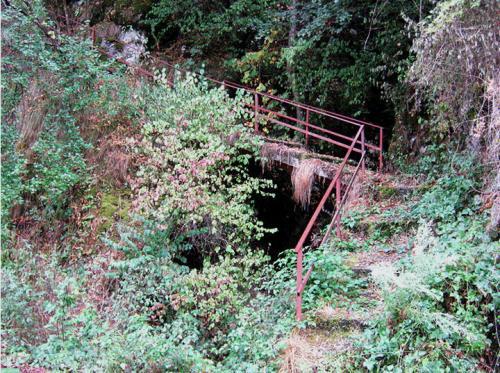 Stepenice za Ivlje
